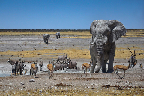 Parc national d'Etosha (centre et sud)