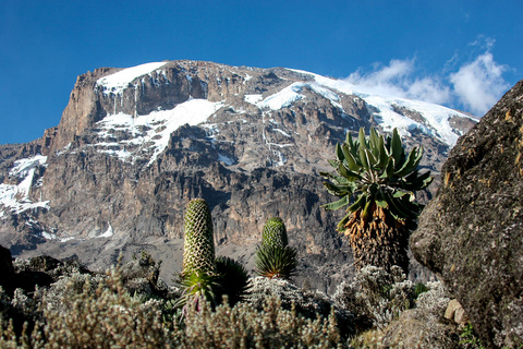 Shira 3840 m - Lava Tower  - Barranco 3950 m