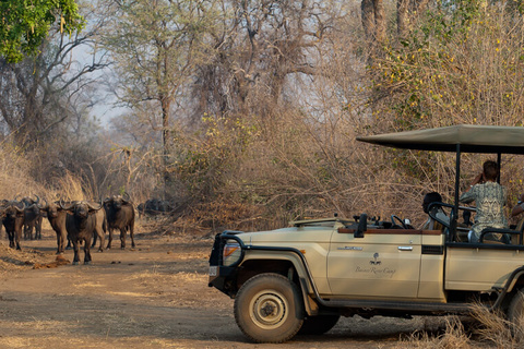 Parc national de Luangwa Sud - Lower Zambezi