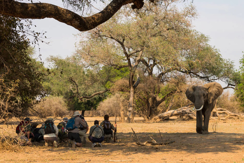 Mana pools - Camp Zambezi - (A pied)