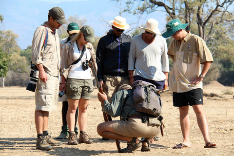 Mana pools - Camp Zambezi (A pied)